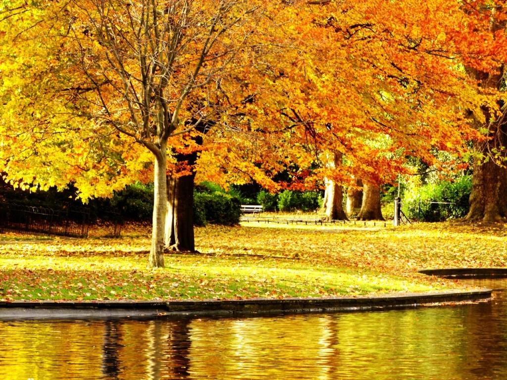 公園 園路 透水性舗装