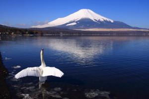 富士山と鶴