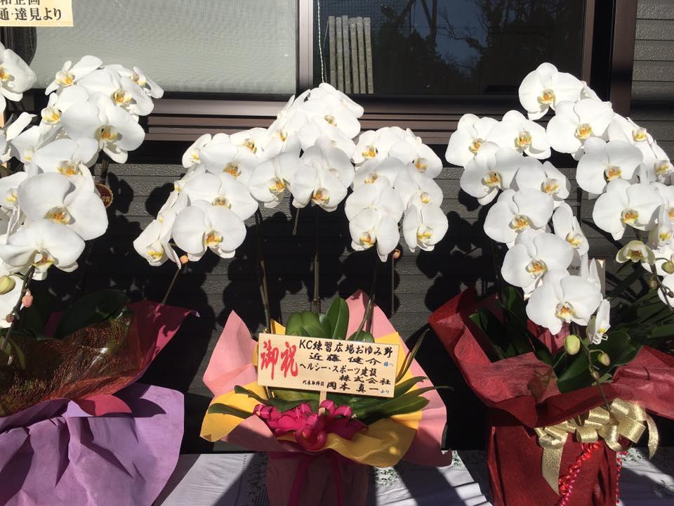 開店祝い 胡蝶蘭