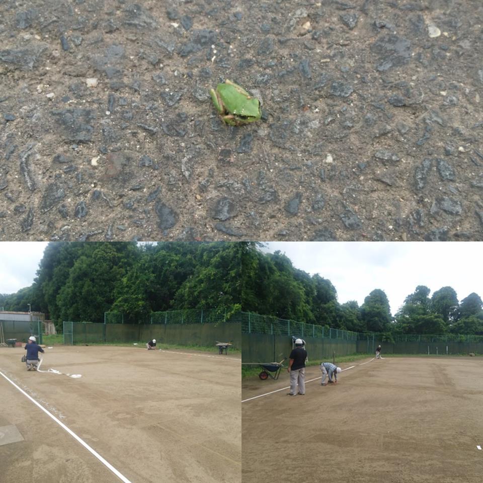 クレイコート ライン張り 雨蛙