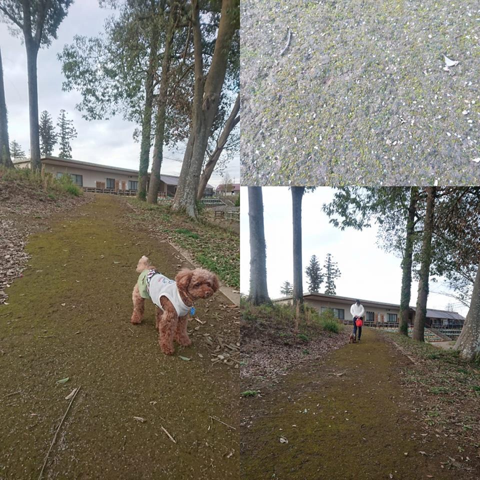 看板犬 モコ 農政センター